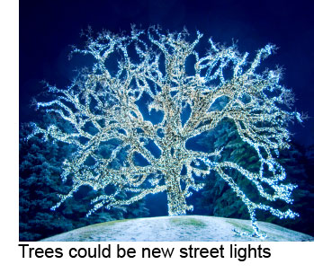 Glowing Bio Led Trees Could Replace Street Lamps Eta